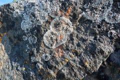 Λειχήνα και βρύο στις πέτρες Στοκ Φωτογραφία