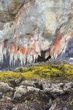 Λειχήνα στο βράχο παραλιών θάλασσας Στοκ Εικόνα