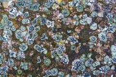 Λειχήνα στο βράχο Στοκ φωτογραφίες με δικαίωμα ελεύθερης χρήσης