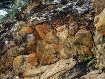 Λειχήνα στο βράχο Στοκ εικόνες με δικαίωμα ελεύθερης χρήσης