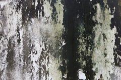 Λειχήνα στο συμπαγή τοίχο στοκ εικόνες με δικαίωμα ελεύθερης χρήσης