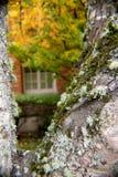 Λειχήνα το φθινόπωρο Στοκ Εικόνες