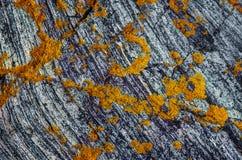 Λειχήνες σε έναν βράχο, μεσημβρία Στοκ Φωτογραφίες