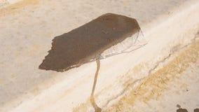 Λειωμένα μέταλλα πάγου στην πέτρα κάτω από το φωτεινό ήλιο τη θερμή ημέρα απόθεμα βίντεο