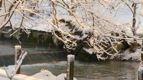 Λειωμένα μέταλλα χιονιού στα δέντρα στον ήλιο φιλμ μικρού μήκους