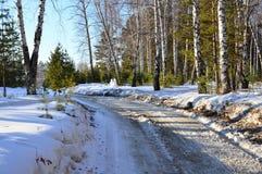 Λειωμένος δρόμος στα ξύλα ερχόμενη άνοιξη Στοκ φωτογραφίες με δικαίωμα ελεύθερης χρήσης