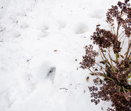 Λειωμένο χιόνι με τον ξηρό θάμνο Ρύπος και χιόνι Άμμος και χιόνι Υπόβαθρο Επίγεια σύσταση με τον κλάδο και τον κλαδίσκο Στοκ φωτογραφία με δικαίωμα ελεύθερης χρήσης