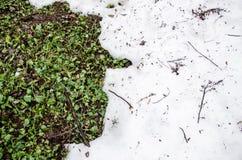 Λειωμένο χιόνι σε μια χλόη τομέων grenn Ρύπος και χιόνι Άμμος και χιόνι Υπόβαθρο Επίγεια σύσταση με τον κλάδο και τον κλαδίσκο μέ Στοκ Φωτογραφία