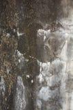 Λεκέδες, βρύο Στοκ Εικόνες