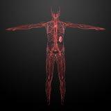 Λεμφατικό σύστημα Στοκ Φωτογραφίες