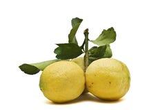 λεμόνια κίτρινα Στοκ φωτογραφίες με δικαίωμα ελεύθερης χρήσης
