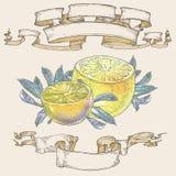 Λεμόνια με τα φύλλα και κορδέλλες Στοκ εικόνες με δικαίωμα ελεύθερης χρήσης