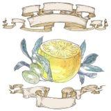 Λεμόνια με τα φύλλα και κορδέλλες Στοκ Εικόνες