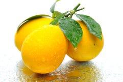 λεμόνια τρία Στοκ Εικόνα