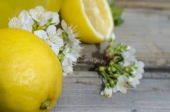 Λεμόνι και άσπρα λουλούδια Στοκ εικόνα με δικαίωμα ελεύθερης χρήσης
