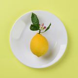 Λεμόνι στο άσπρο πιάτο Στοκ εικόνα με δικαίωμα ελεύθερης χρήσης