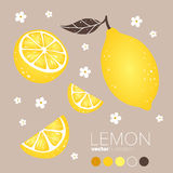 Λεμόνι, φέτα λεμονιών με τα λουλούδια και τα φύλλα επίσης corel σύρετε το διάνυσμα απεικόνισης Στοκ Φωτογραφίες