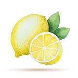 Λεμόνι Watercolor - κίτρινο Στοκ φωτογραφία με δικαίωμα ελεύθερης χρήσης