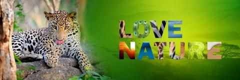 Λεοπάρδαλη με τη φύση αγάπης κειμένων Στοκ Εικόνες