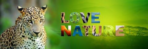 Λεοπάρδαλη με τη φύση αγάπης κειμένων Στοκ Εικόνα