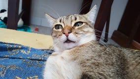 Λεοπάρδαλη ή γάτα Στοκ φωτογραφίες με δικαίωμα ελεύθερης χρήσης