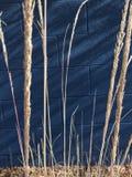 Λεπίδες της χλόης Στοκ εικόνες με δικαίωμα ελεύθερης χρήσης