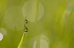 Λεπίδα της χλόης με τις σταγόνες βροχής Στοκ Εικόνα