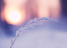 Λεπίδα της χλόης που καλύπτεται με το χιόνι Στοκ εικόνα με δικαίωμα ελεύθερης χρήσης