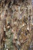 Λεπιοειδής φλοιός στοκ εικόνα με δικαίωμα ελεύθερης χρήσης