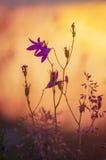 Λεπτά άγρια κουδούνια Στοκ εικόνες με δικαίωμα ελεύθερης χρήσης