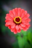 Λεπτά και γοητευτικά λουλούδια Στοκ φωτογραφία με δικαίωμα ελεύθερης χρήσης