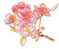 Γαμήλια λουλούδια Λεπτά λουλούδια στον κλάδο διανυσματική απεικόνιση