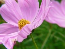 λεπτά λουλούδια Στοκ εικόνα με δικαίωμα ελεύθερης χρήσης