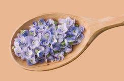 Λεπτά μπλε πέταλα λουλουδιών σε μια ξύλινη κινηματογράφηση σε πρώτο πλάνο κουταλιών Στοκ Φωτογραφία