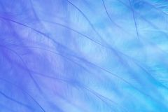 Λεπτά χρώματα κρητιδογραφιών στενό φτερό επάνω Πολύχρωμη ανασκόπηση Στοκ φωτογραφίες με δικαίωμα ελεύθερης χρήσης
