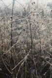 Λεπτές χλόες λιβαδιών που λαμπυρίζουν στο πρώτο φως στοκ φωτογραφία