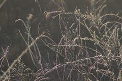 Λεπτές χλόες λιβαδιών που λαμπυρίζουν στο πρώτο φως στοκ φωτογραφίες