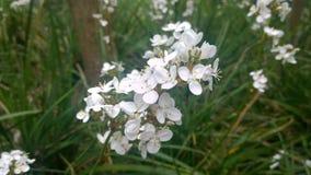 Λεπτή άσπρη κινηματογράφηση σε πρώτο πλάνο λουλουδιών Στοκ Φωτογραφίες