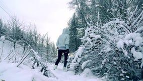 Λεπτή νέα γυναίκα στο γκρίζο σακάκι που περπατά σε πυροβοληθε'ντα όμορφοι χιονώδους χειμώνα δασικός σε αργή κίνηση, κρύα χρώματα απόθεμα βίντεο