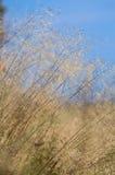 Λεπτή ξηρά χλόη Στοκ εικόνες με δικαίωμα ελεύθερης χρήσης
