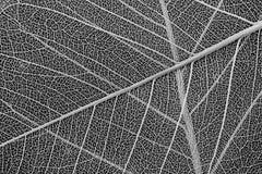 Λεπτή δομή κυττάρων φύλλων Στοκ Εικόνες