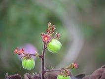 Λεπτή ομορφιά σε ένα απλό λουλούδι, μικροσκοπική ομορφιά Στοκ Εικόνες