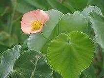 Λεπτή ομορφιά σε ένα απλό λουλούδι Στοκ Εικόνες