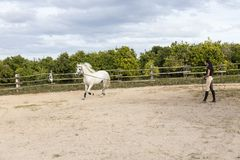 Λεπτή σκοτεινός-μαλλιαρή νέα γυναίκα στην οδήγηση των ενδυμάτων που ασκούν το άσπρο άλογό της στο μόλυβδο στοκ εικόνα με δικαίωμα ελεύθερης χρήσης