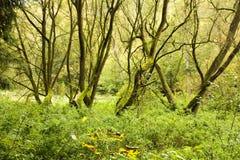 Λεπτοί κορμοί δέντρων Στοκ εικόνα με δικαίωμα ελεύθερης χρήσης