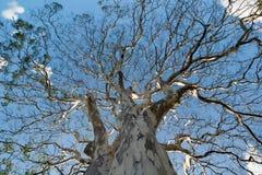 Λεπτομέρεια δέντρων Στοκ Εικόνα