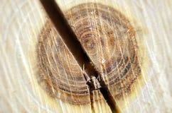 Λεπτομέρεια ενός κορμού δέντρων περικοπών Στοκ εικόνες με δικαίωμα ελεύθερης χρήσης