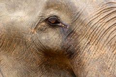 Λεπτομέρεια ενός ματιού ελεφάντων Στοκ φωτογραφία με δικαίωμα ελεύθερης χρήσης