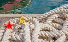 Λεπτομέρεια ενός σχοινιού για την πρόσδεση με δύο αστερίες θάλασσας Στοκ Φωτογραφία