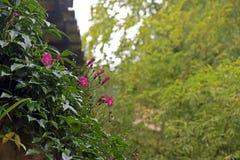 Λεπτομέρεια κήπων με των εγκαταστάσεων και των λουλουδιών που αναστέλλονται την αναρρίχηση Στοκ εικόνα με δικαίωμα ελεύθερης χρήσης